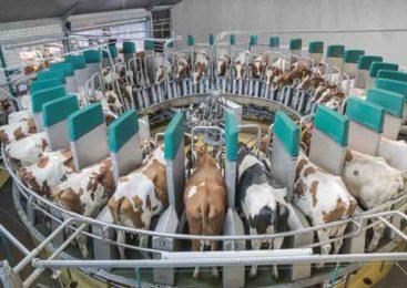 Уникальный проект по развитию молочного кластера