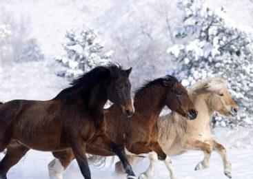 Акмолинские полицейские вернули владельцу более 140 голов лошадей