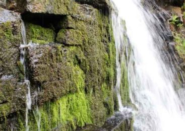 В место паломничества туристов намерены превратить водопад в Зеренде