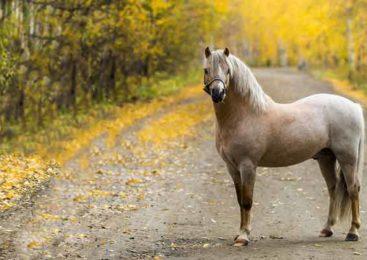 Когда лошадь причина ДТП