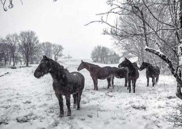 Берегите животных зимой!